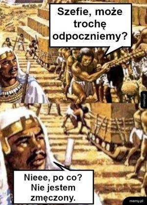 Kot Vs Ogórek Memypl