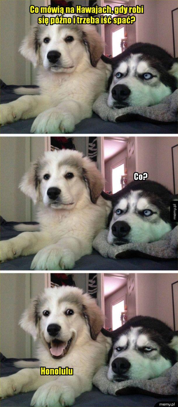 Psi suchar-zagadka