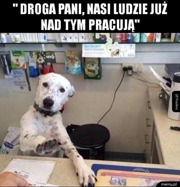 Zapracowany pies