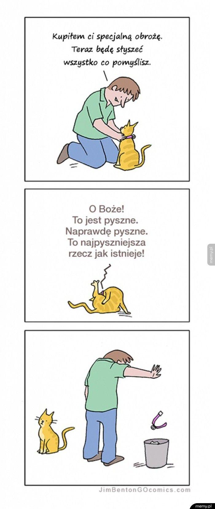 Kocie myśli
