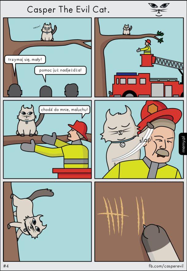 Rozrywka koteła