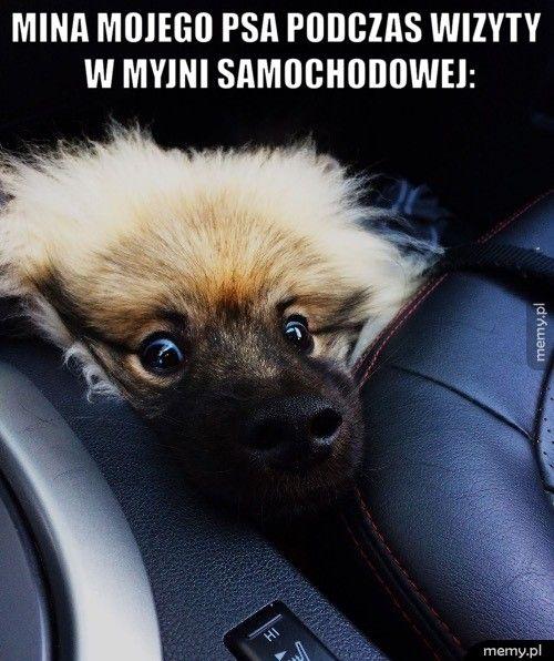 Mina mojego psa podczas wizyty w myjni samochodowej: