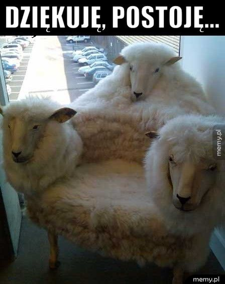 Owczy fotel