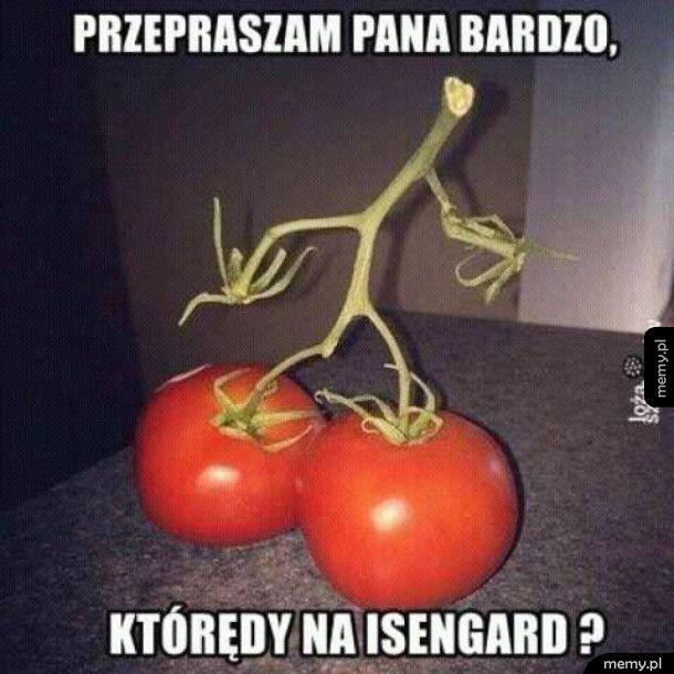 Ent Pomidorzec