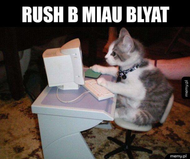Moj kot gra w CSa