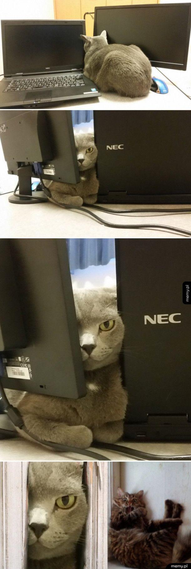 Przerażający koteł
