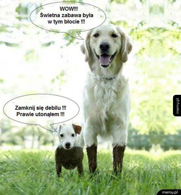 Mały Pies vs Duży Pies