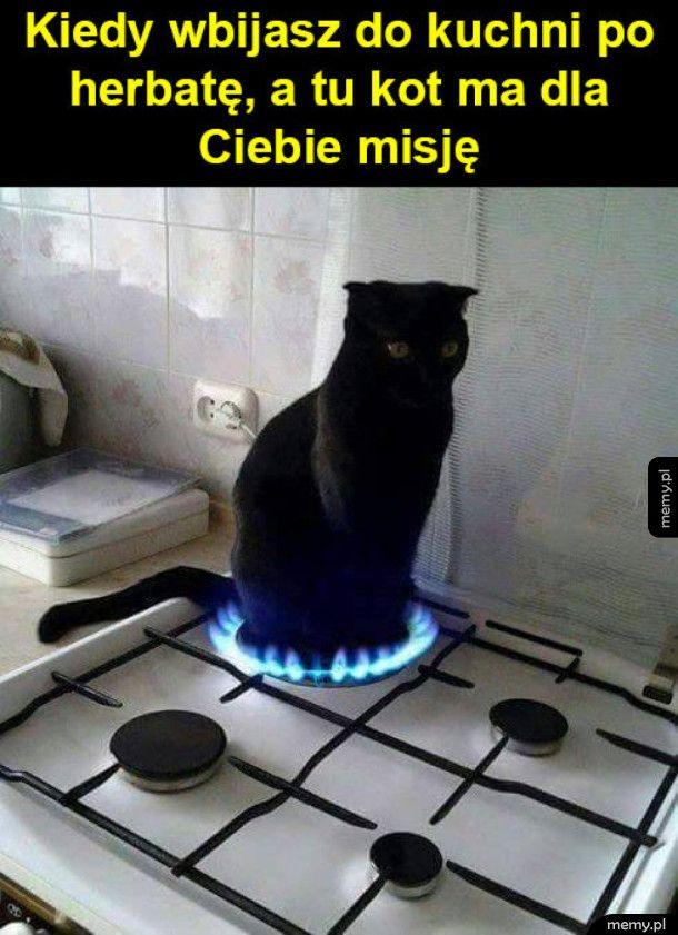Kot ma misję