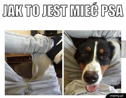 Jak to jest mieć psa