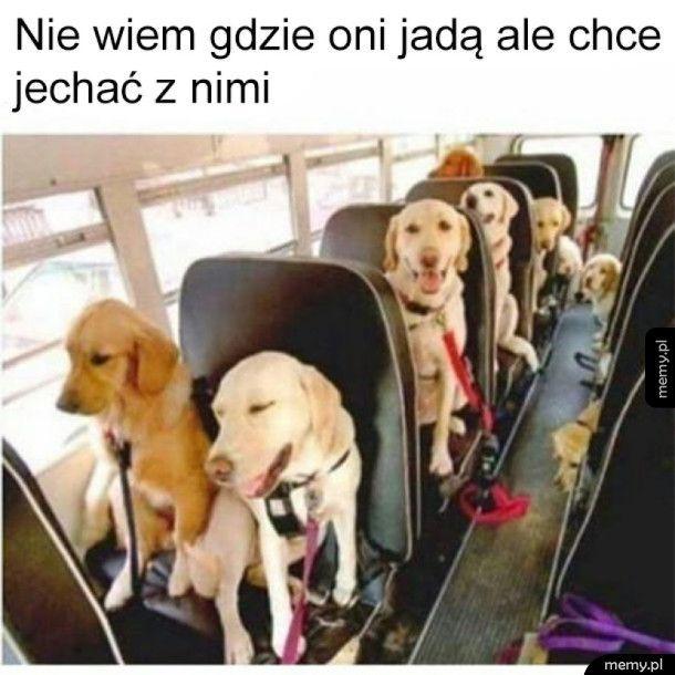 Autobus do krainy szczęścia