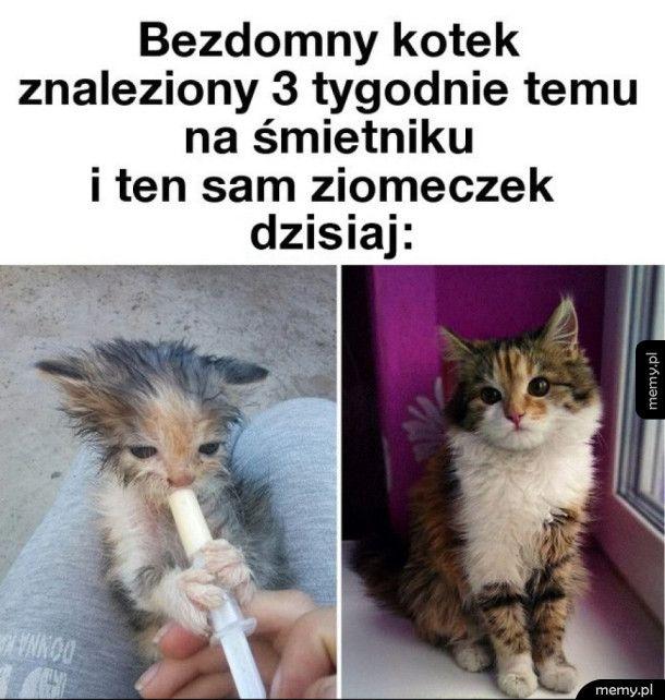 Bezdomny kotek