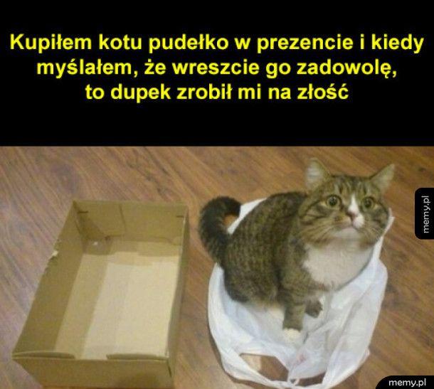 Złośliwy kot