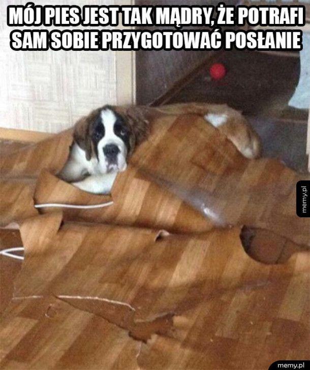 Najmądrzejszy pies na świecie