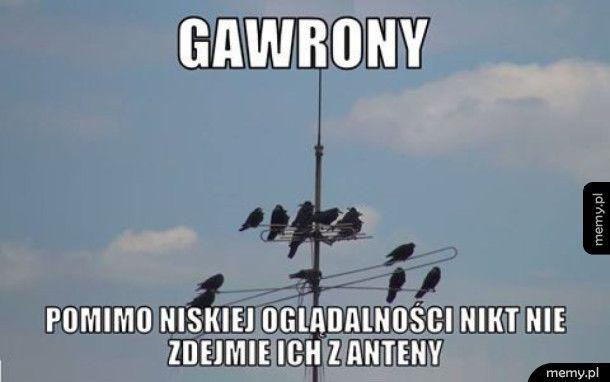 Gawrony