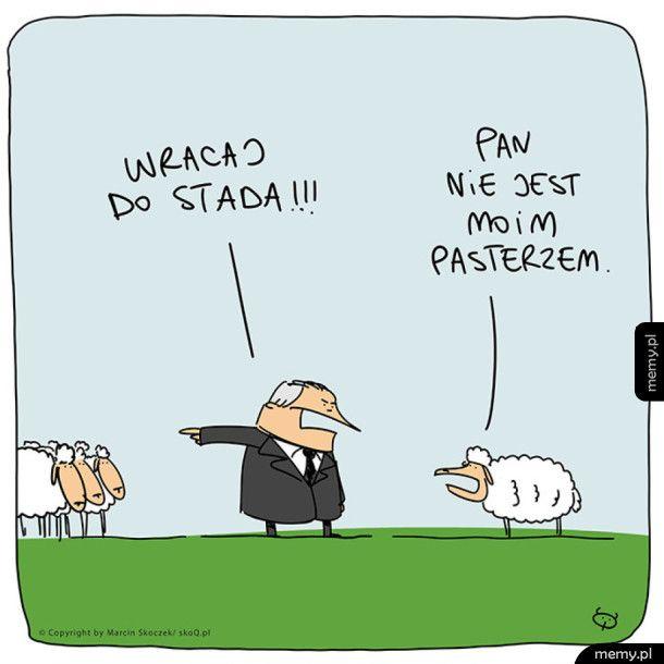 Mądra owca