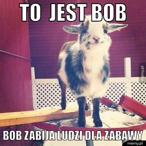 To  jest Bob  Bob zabija ludzi dla zabawy