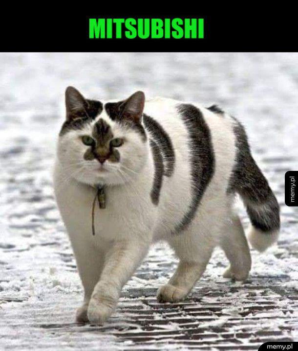 Fajny kot