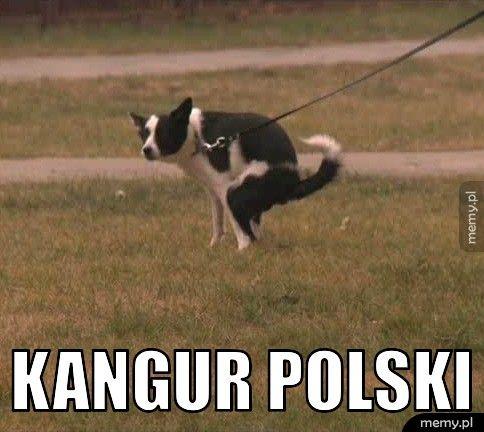Polski kangur