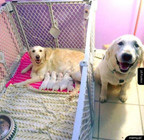 Psia rodzinka