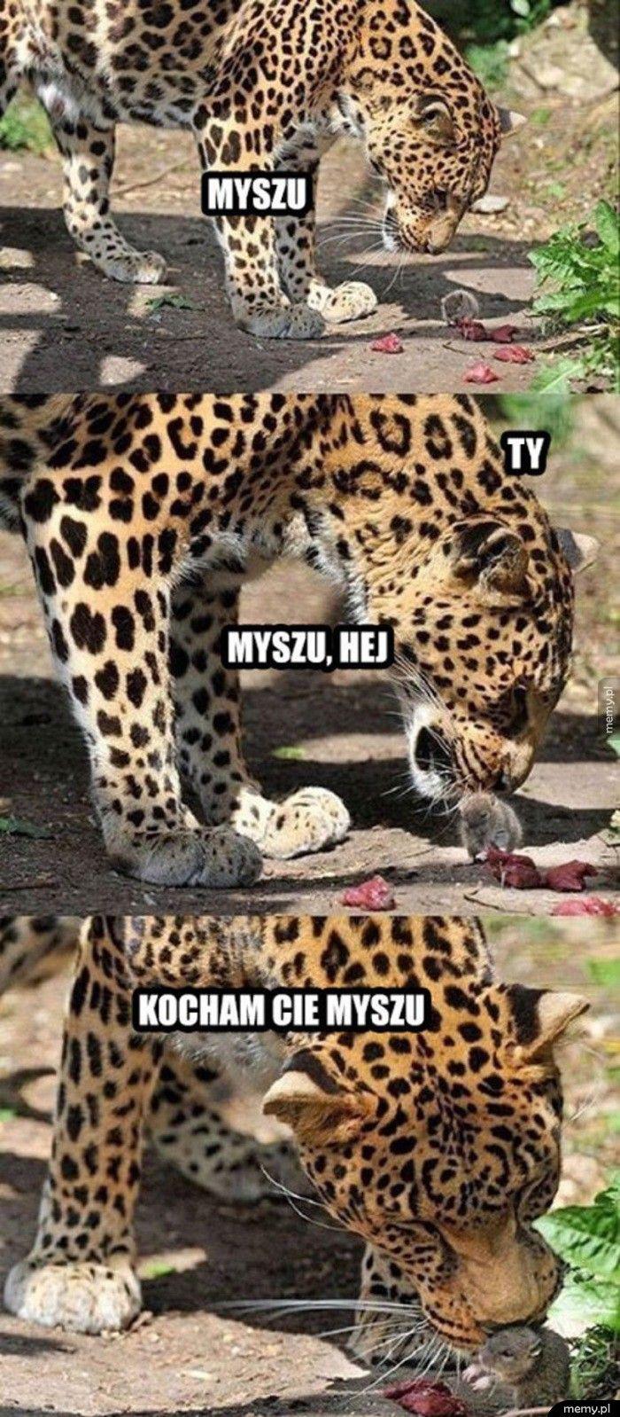 Myszu