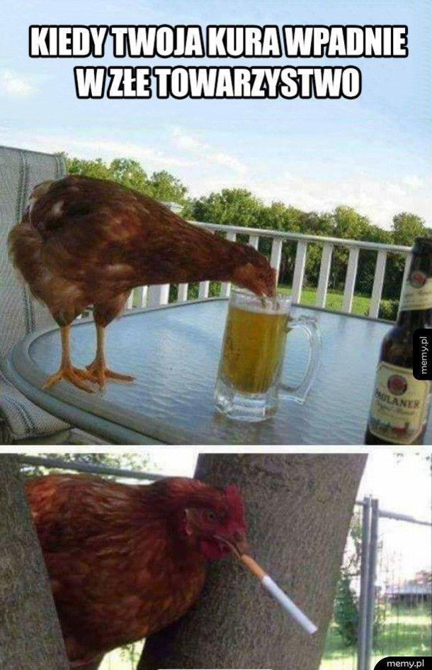 Kiedy twoja kura wpadnie w złe towarzystwo