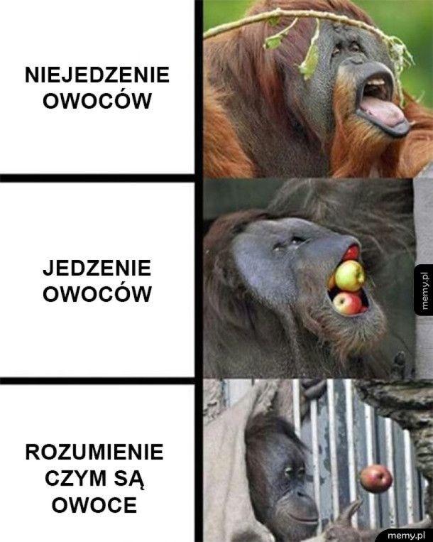 Ostatnia małpa wygrała