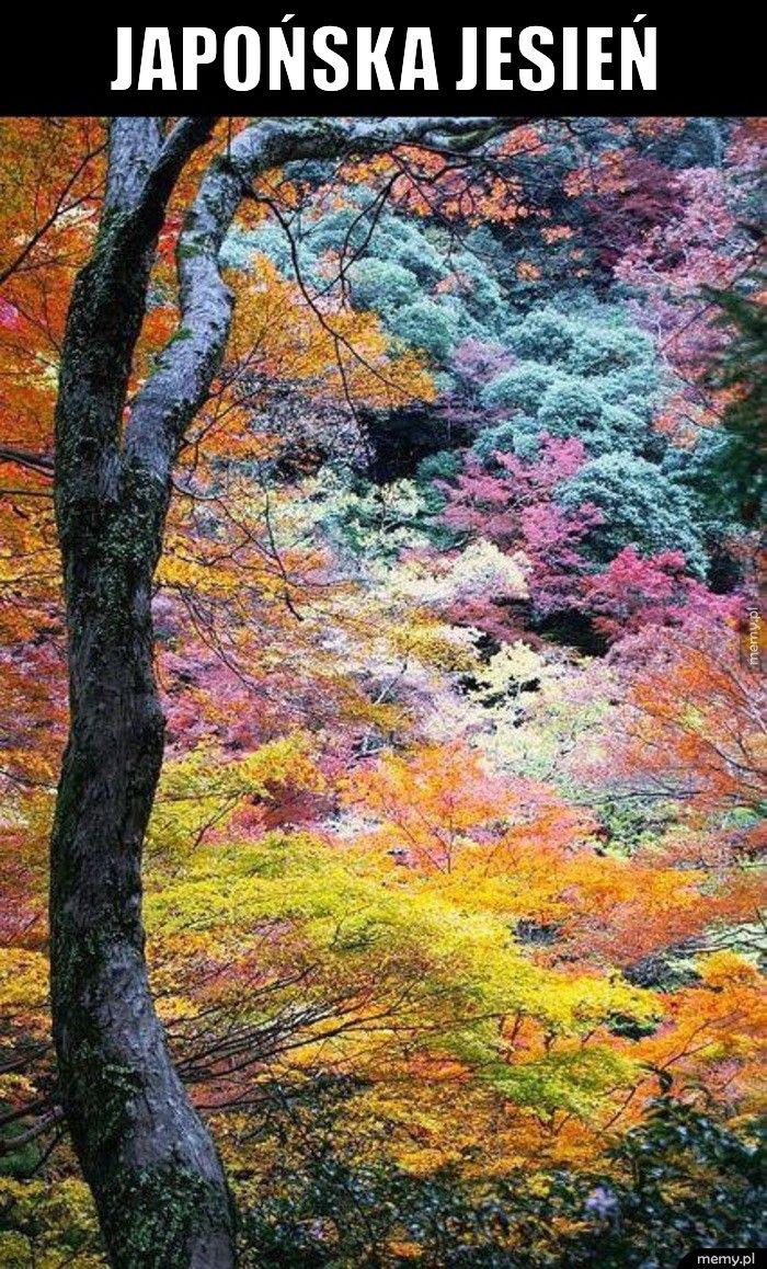 Japońska jesień