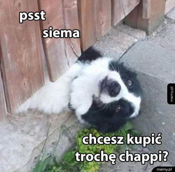 Chappi dealer