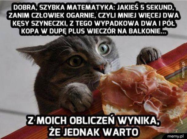 Matematyka według kota