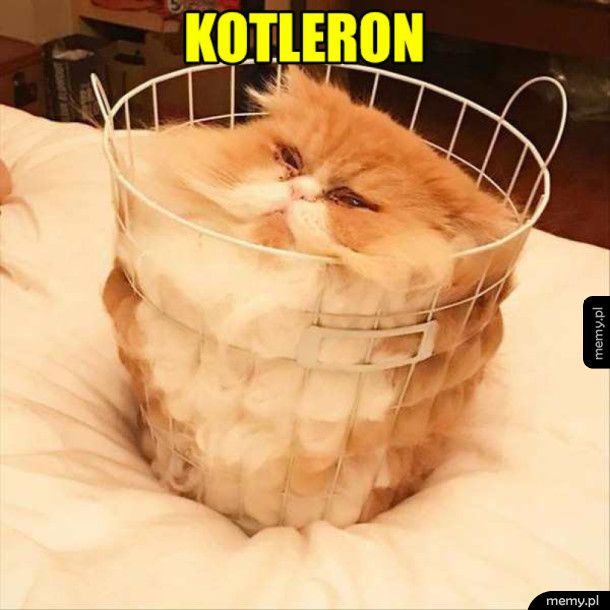 Ten koteł jest szynkę