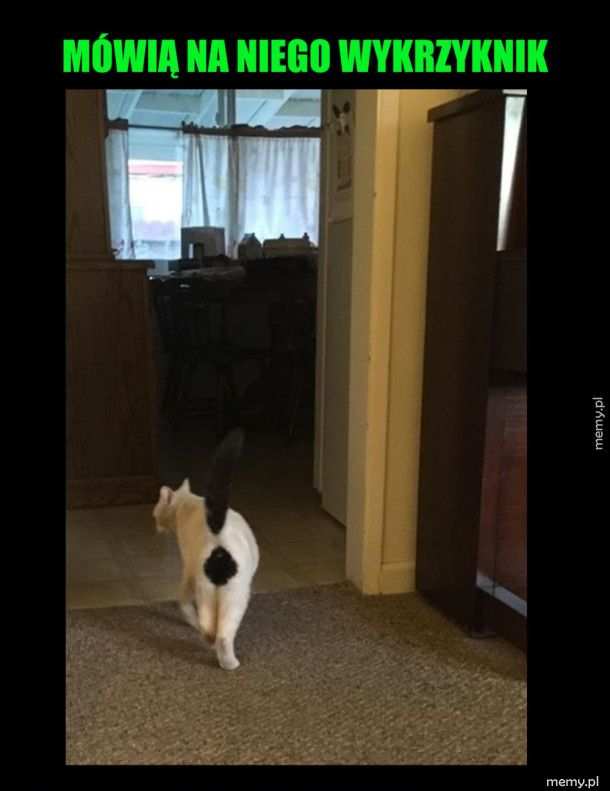 Zabawany koteł