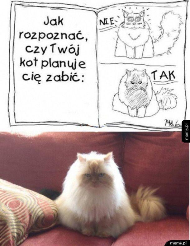 Jak poznać kota mordercę