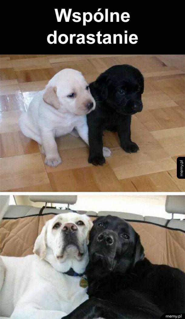 Przyjaźń na zawsze