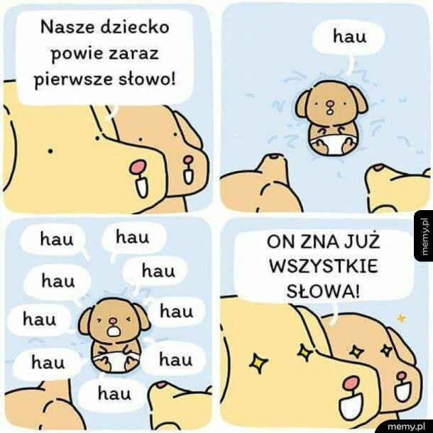 Jaki mądry pies