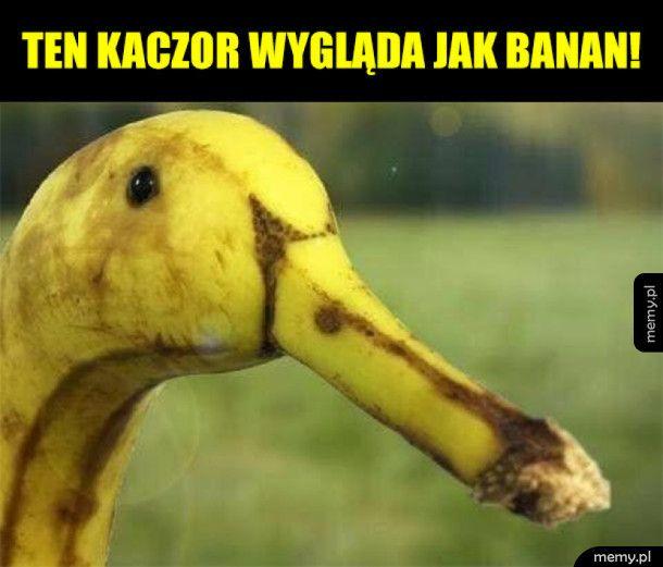 Kaczor czy banan