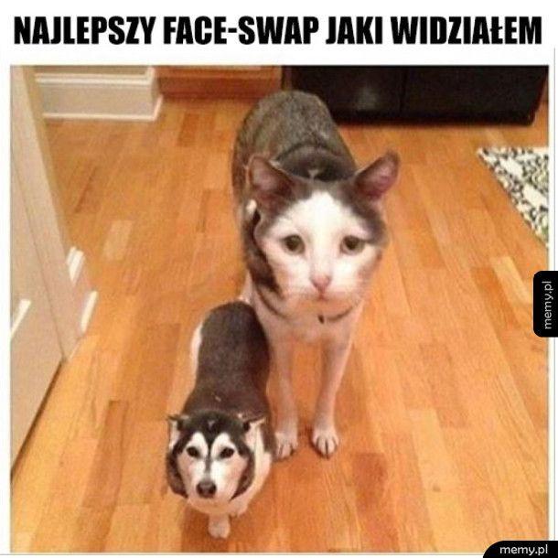 To pies czy kot ?