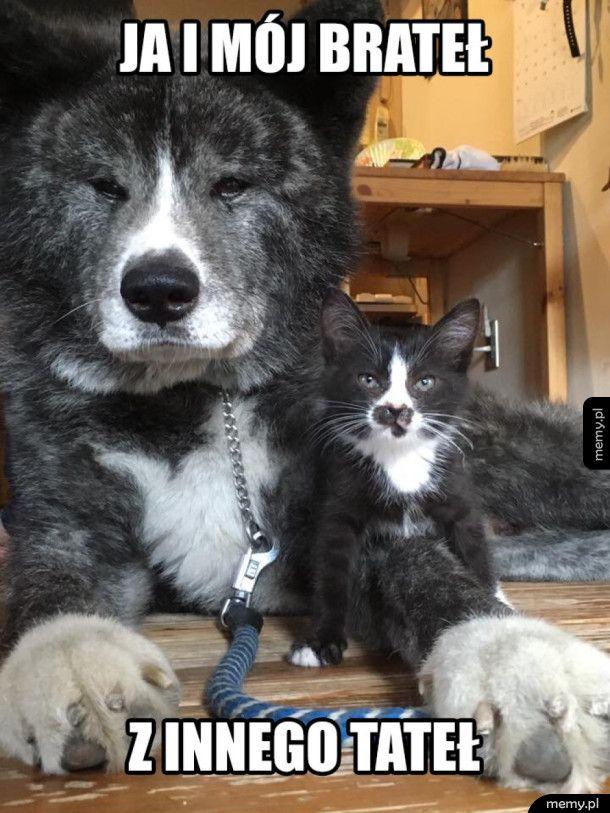 Pieseł z koteł