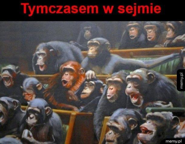 Panie Orangutanie, ja bez żadnego trybu przemawiam...