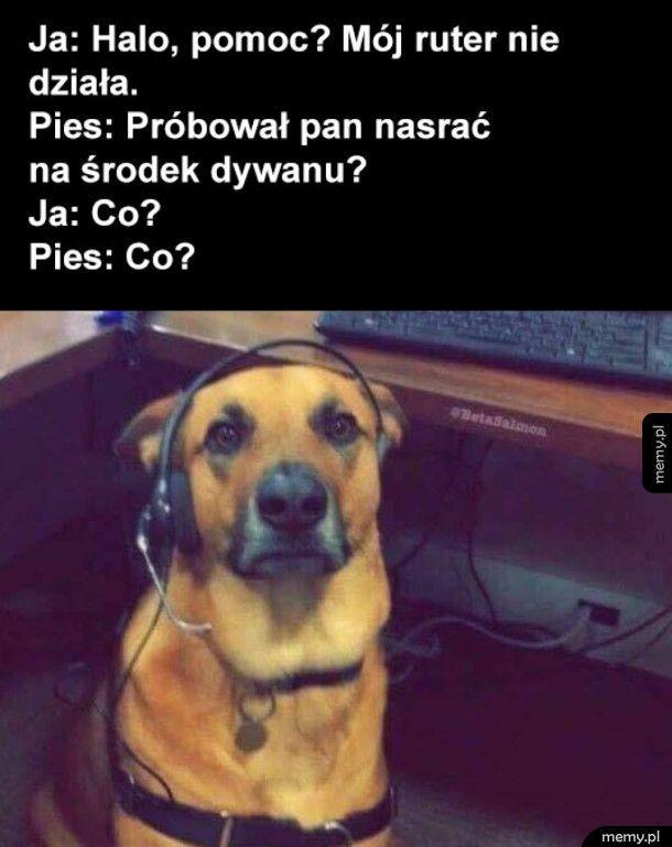 Pies pomocnik konsultant