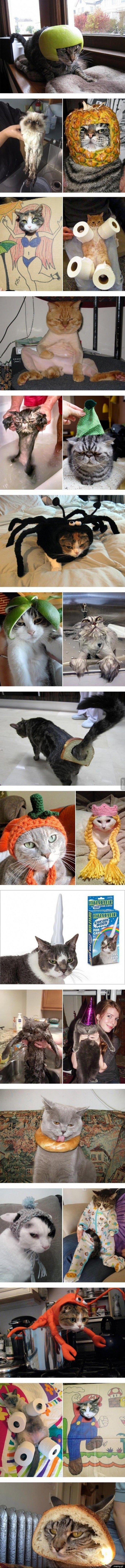 Moda kocia