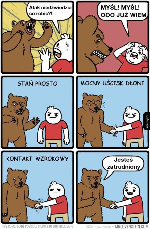 Co zrobić, kiedy spotkasz niedźwiedzia
