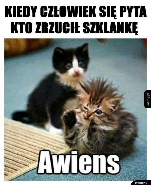 Z kotami tak jest
