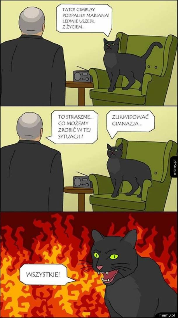 Kot Jarosława
