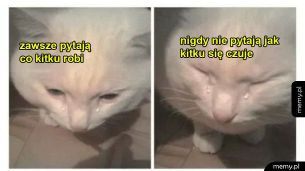 Smutny kitku :(
