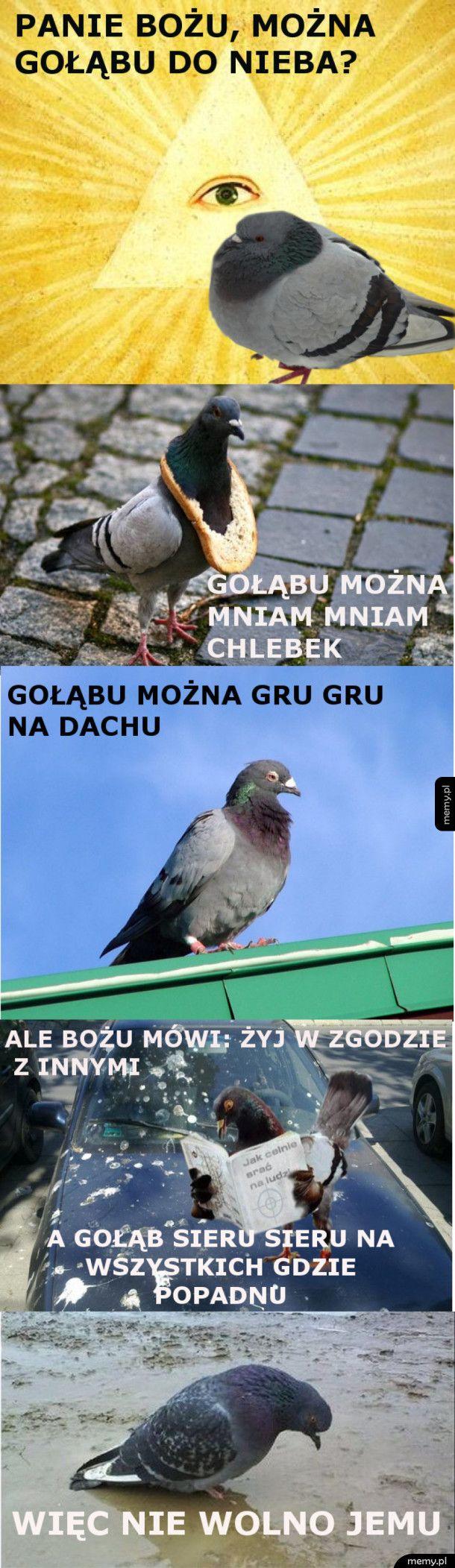 Gołąbu