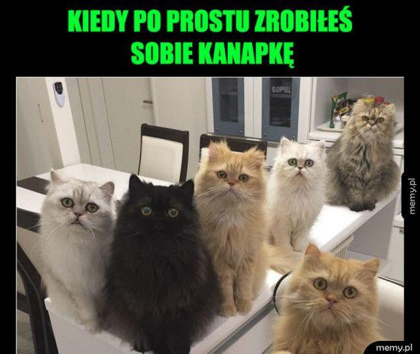 Zabawne koty