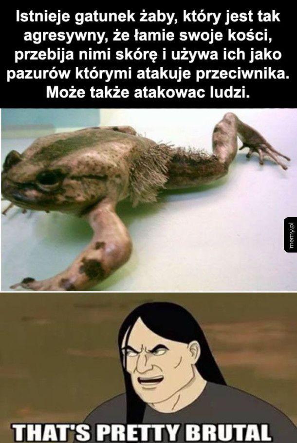 Kochana żabcia