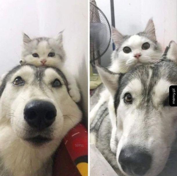 Najlepsi przyjaciele
