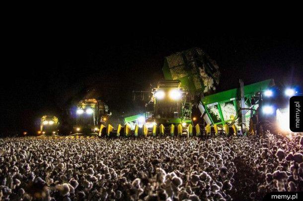 Kombajn na plantacji bawełny wygląda jak koncert rockowy