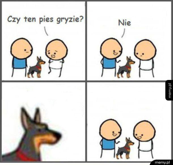 Czy ten pies gryzie?